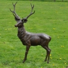 Bronze Stag Life size