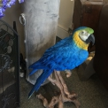 Blue life size South American faux Parrot