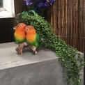 Love Birds faux resin painted