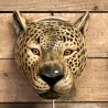 Cheetah wall vase ceramic