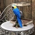 Medium sized faux lifelike Parrot blue macaw