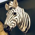 Faux resin Zebra head ,wall mounted