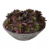 concrete bowl of faux everlasting Echeveria