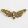 Decorative gold resin moth wall art